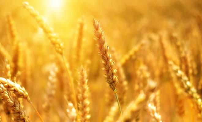 miglioramento-genetico-delle-piante-agrarie-la-siga-chiede-la-modifica-della-direttiva-europea-1604531599