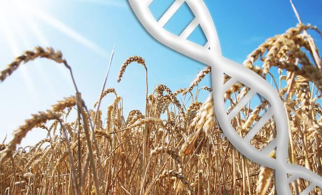 nuove-biotecnologie-appello-della-scienza-contro-loscurantismo-europeo-1596197565