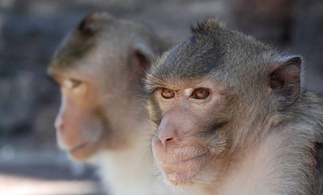 sperimentazione-animale-sospese-le-ricerche-delle-universit-di-torino-e-parma-la-comunit-scientifica-attacco-ideologico-alla-ricerca