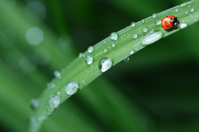 Suolo, acqua, piante e atmosfera: i regni della Chimica Agraria