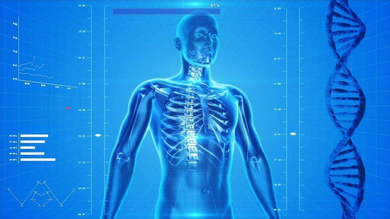 Fisiologia: la disciplina capace di svelarci come funzionano la vita e l'uomo